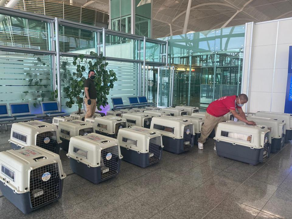 flying with pets, flying with dogs, international pet travel, dog, Iraq, Military, Erbil