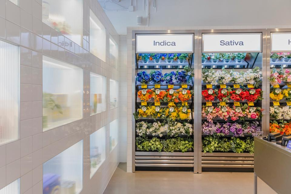 A flower display wall that gives consumers a air-waft of the cannabis terpenes for each strain, as seen at the Summerhill Superette location.