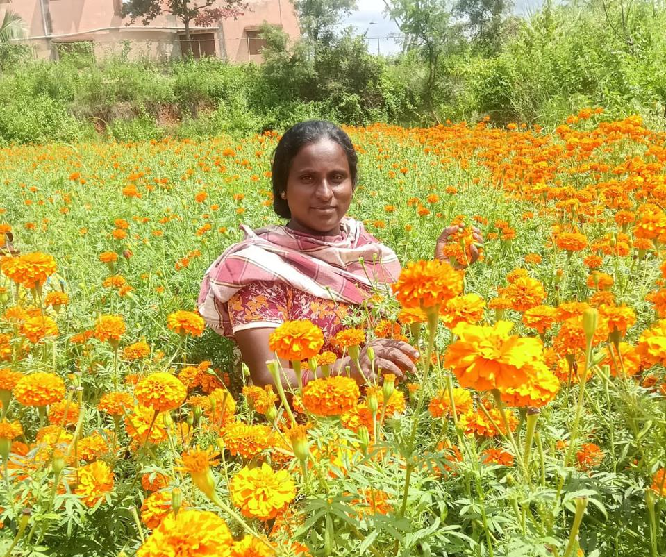 Woman in India stands in field of marigolds