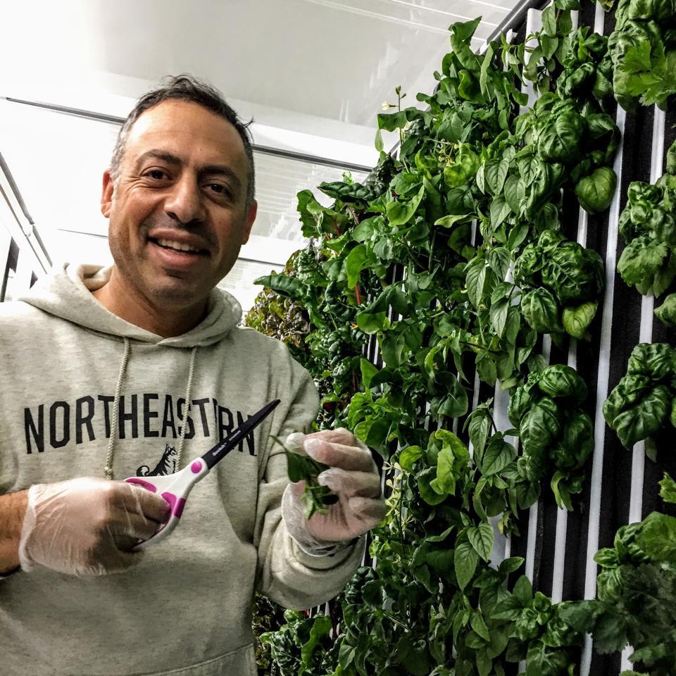 Aviad Sheinfeld and his hydroponic farm