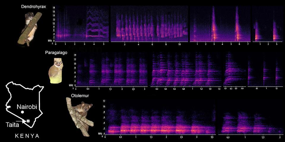 Calls made by three arboreal mammals.