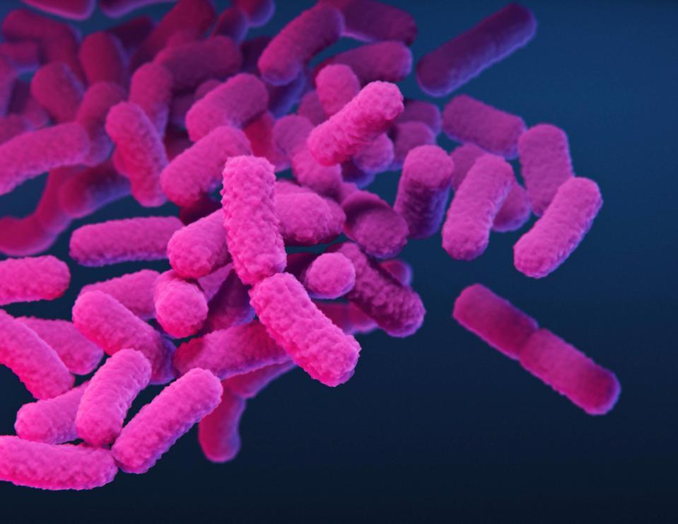 Illustration of Enterobacteriaceae bacteria.