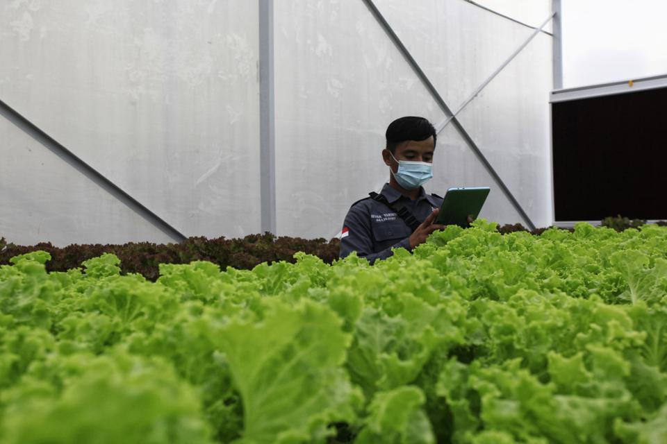 Agriculture Technology In Smart Green House