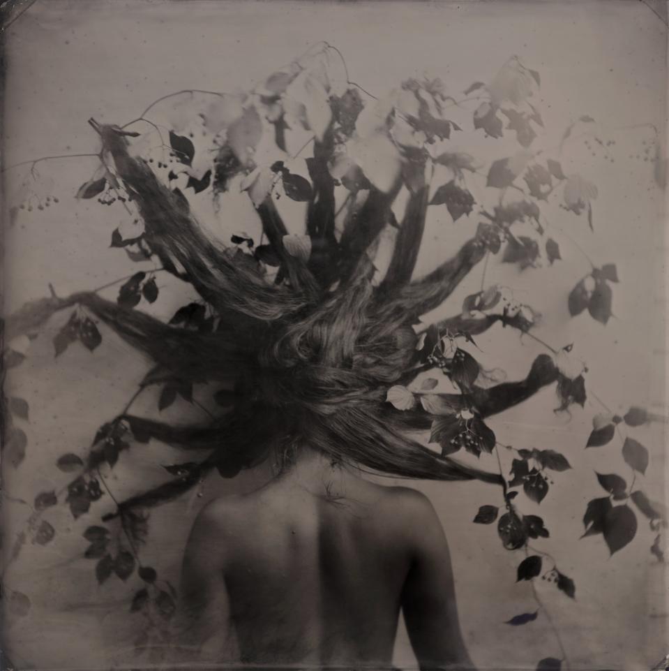 Rachel Portesi, 'Branches,' 2017. Wet plate collodion tintype 14 x 14 in. (approx. 36 x 36 cm.).
