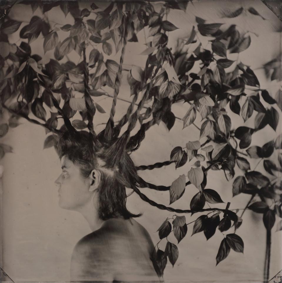 Rachel Portesi, 'Daphne,' 2017. Wet plate collodion tintype 14 x 14 in. (approx. 36 x 36 cm.).