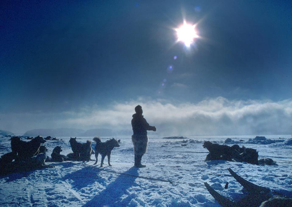 Man & Sled Dogs