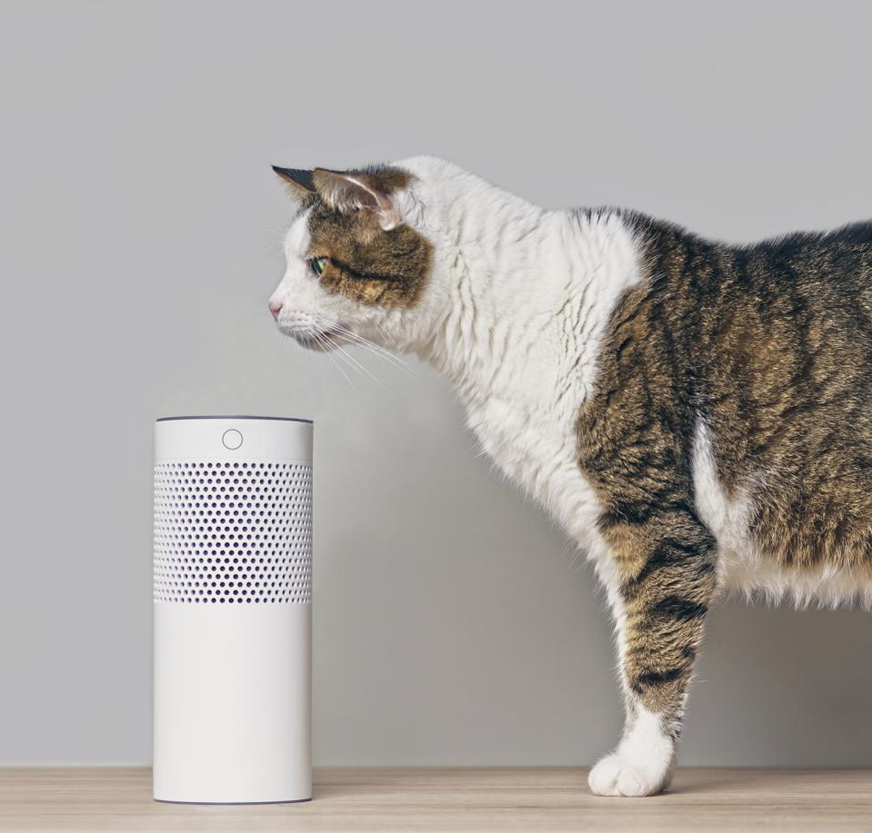 While technology has not made it possible for cats to talk (yet) - at least this cat is exploring voice technology.