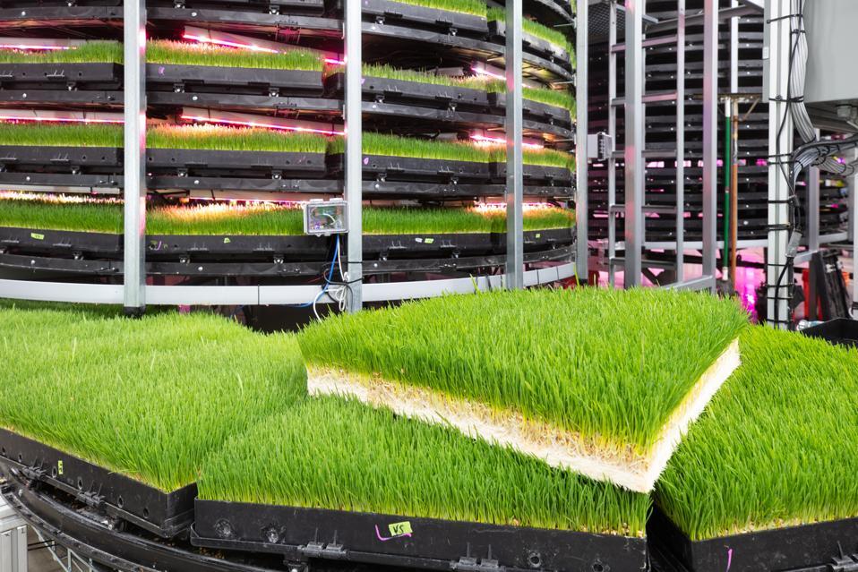 Animal ag technology by Grov Technologies