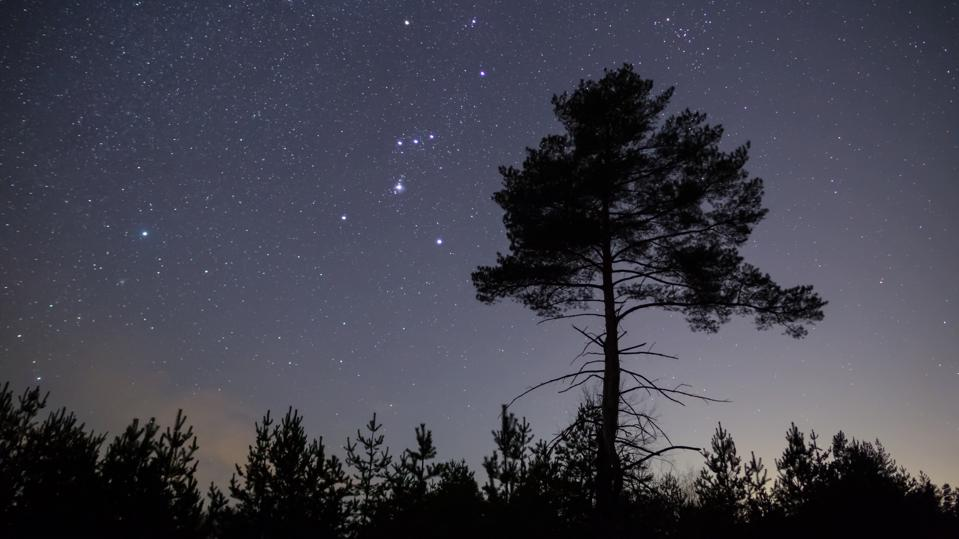 Orion constellation on a night starry sky above alone pine tree, night outdoor background