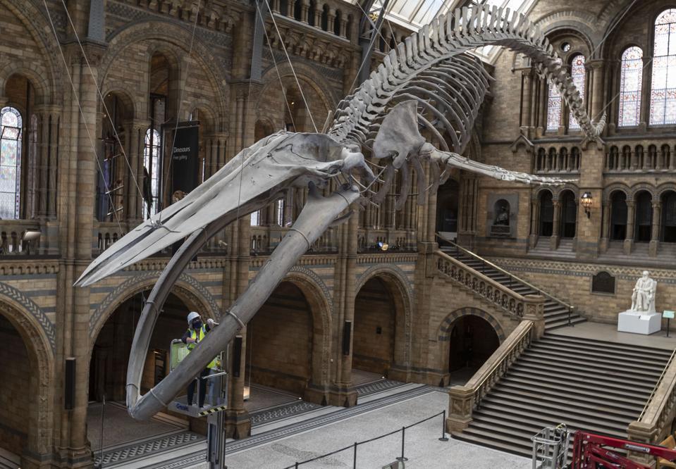 BRITAIN-LONDON-NATURAL HISTORY MUSEUM-REOPENING-PREPARATION