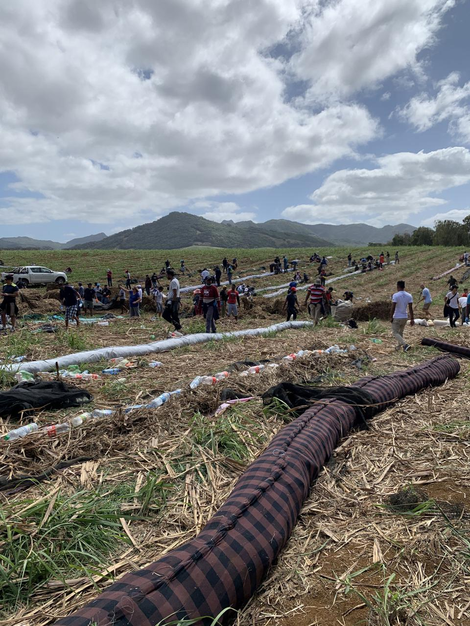 Thousands of volunteers across the country were involved in making booms of dried sugar cane leaves and transporting them to the affected coastal regions.