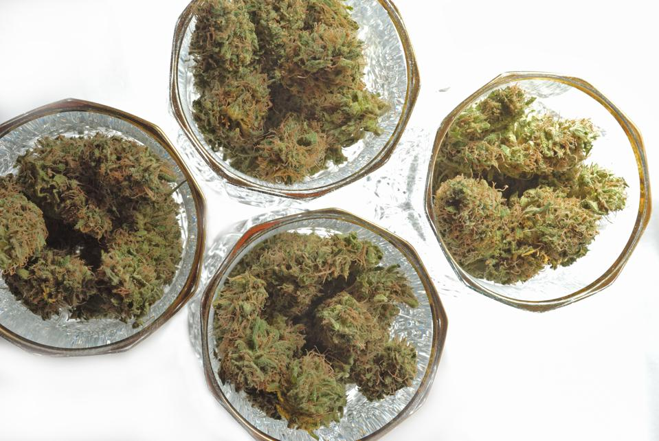 Four wine glasses filled with marijuana, as seen from above.