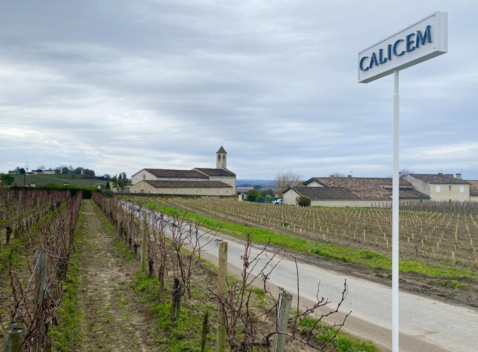 Calicem vines