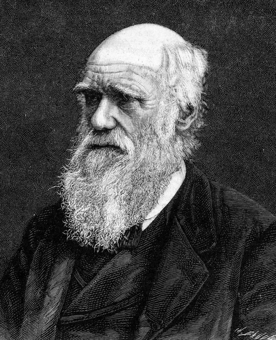 Charles Darwin, English naturalist, wrote the first unifying theory of evolution