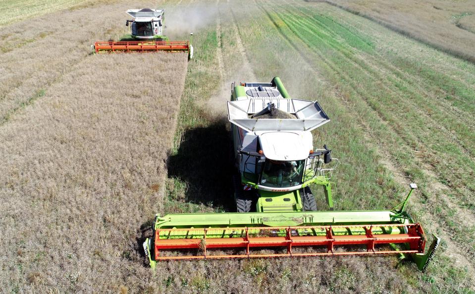 Rapeseed harvest has begun