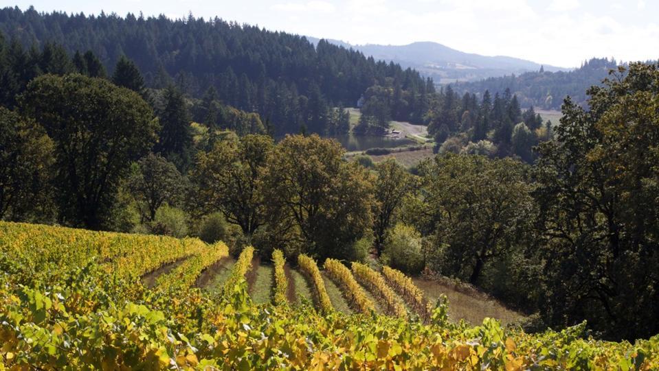 The Beaux Frères Vineyard in Oregon's Willamette Valley