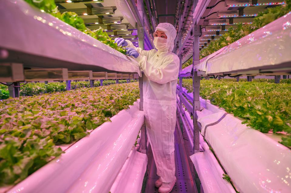 Japanese Vertical Farm Company Grows Food of the Future