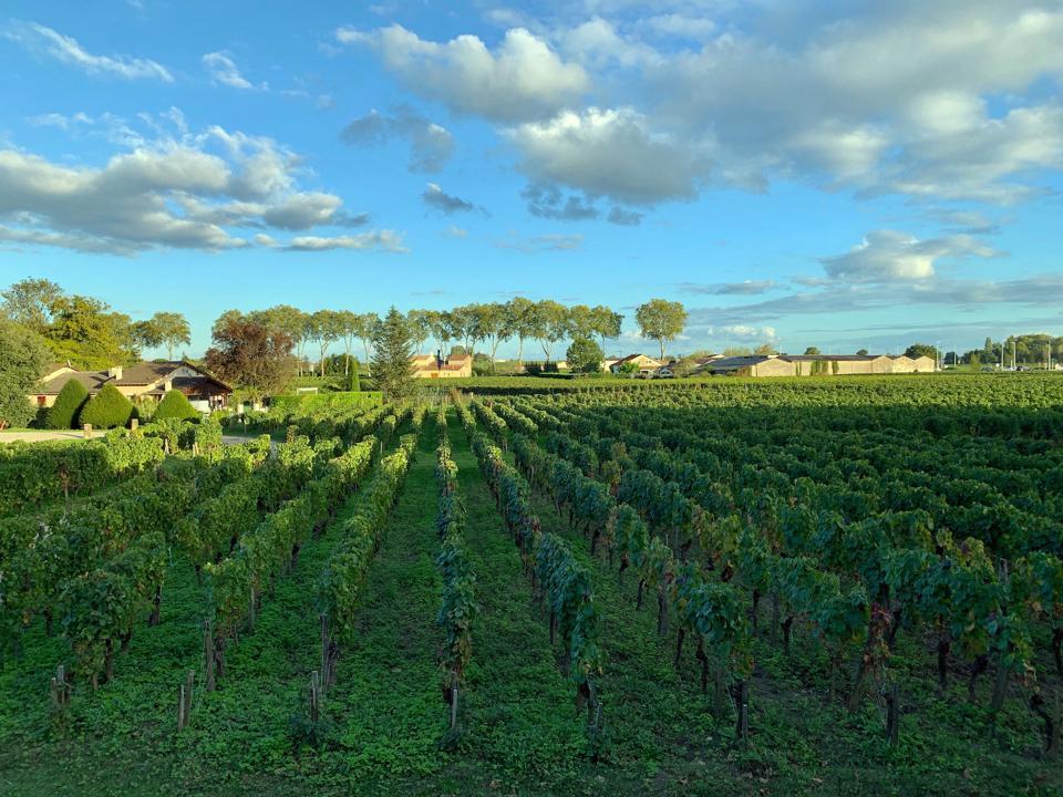 Pomerol, Bordeaux, France
