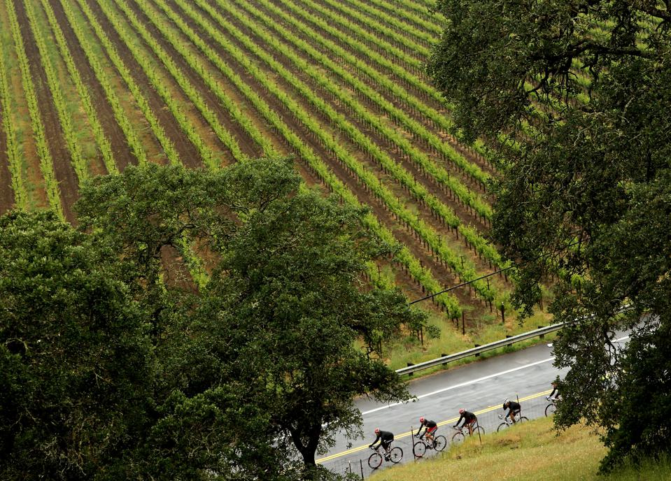 From Calistoga to American Canyon, there are countless  cycling routes to explore.