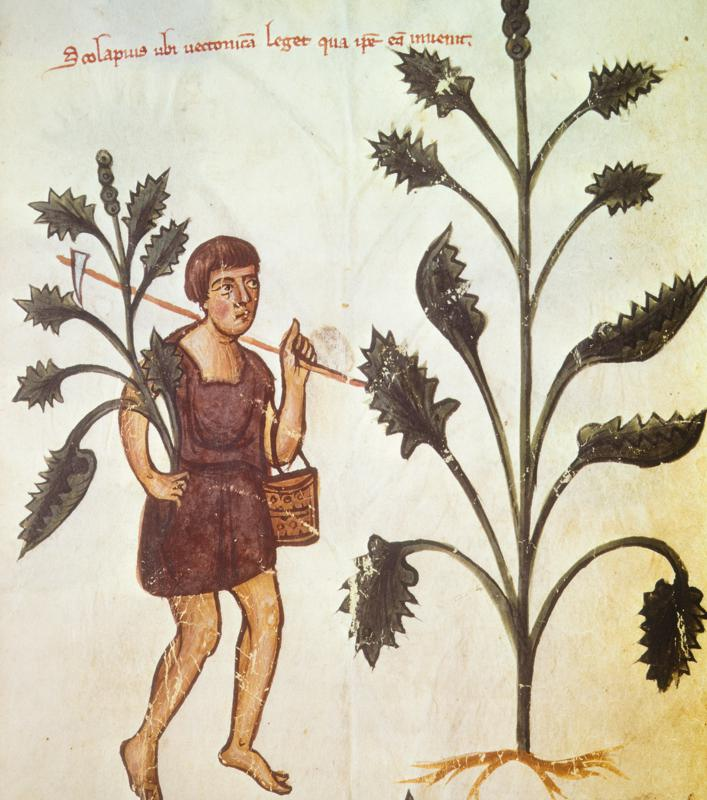 Plants, an illustration of a treatise by Hippocrates