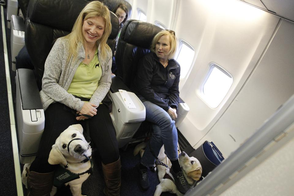Gail Horn, left, with guide dog puppy-in-training Wisp and Theresa Stern, right, and her dog Wills, sit in a Alaska Airlines plane at the Oakland International Airport on Sunday, March 19, 2017, in Oakland, Calif.  About 25 guide dog puppies-in-training t