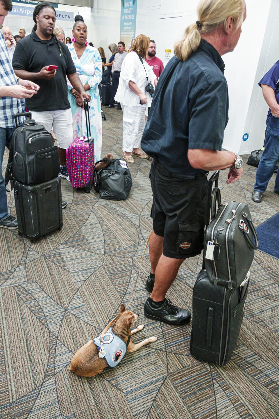 Florida, Fort Lauderdale, airport passenger gate area, man with service dog