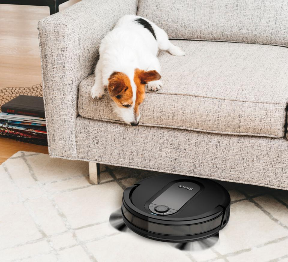 Dog on couch watching a robot vacuum do its work