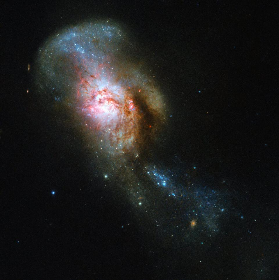 the Medusa merger.   Often referred to by its somewhat drier New General Catalogue designation of NGC 4194, this was not always one entity, but two. An early galaxy consumed a smaller gas-rich system, throwing out streams of stars and dust out into space.