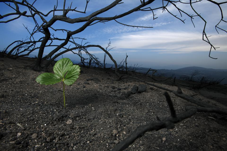 A plant begins grows in desolate soil