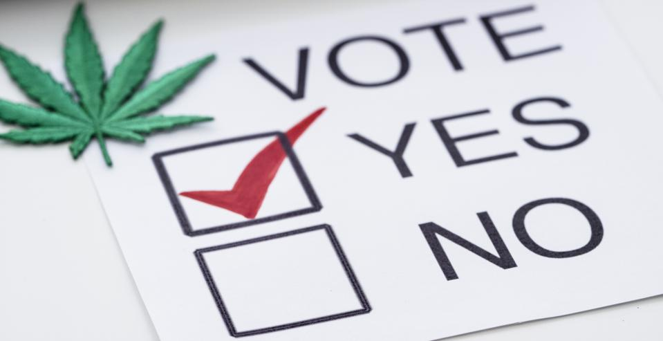 A green marijuana leaf is placed on a voting ballot marked as 'Yes'