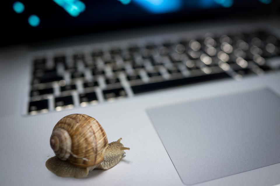 Slow snail crawling on laptop