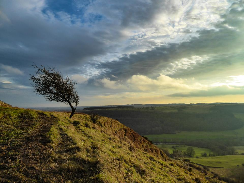 A windswept tree on a steep edge against a dramatic sky