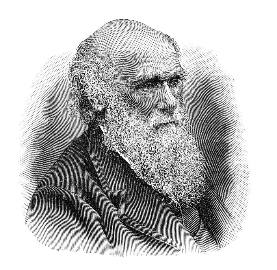 Charles Darwin portrait illustration