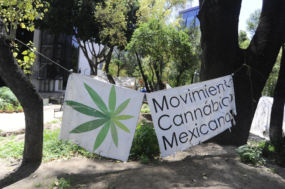 A marijuana activist camp outside Mexico's Senate building.