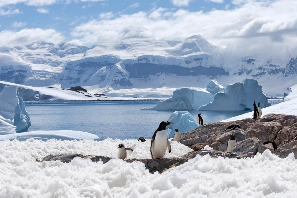 Penguins surrounded by mountains and glaciers in Antarctica