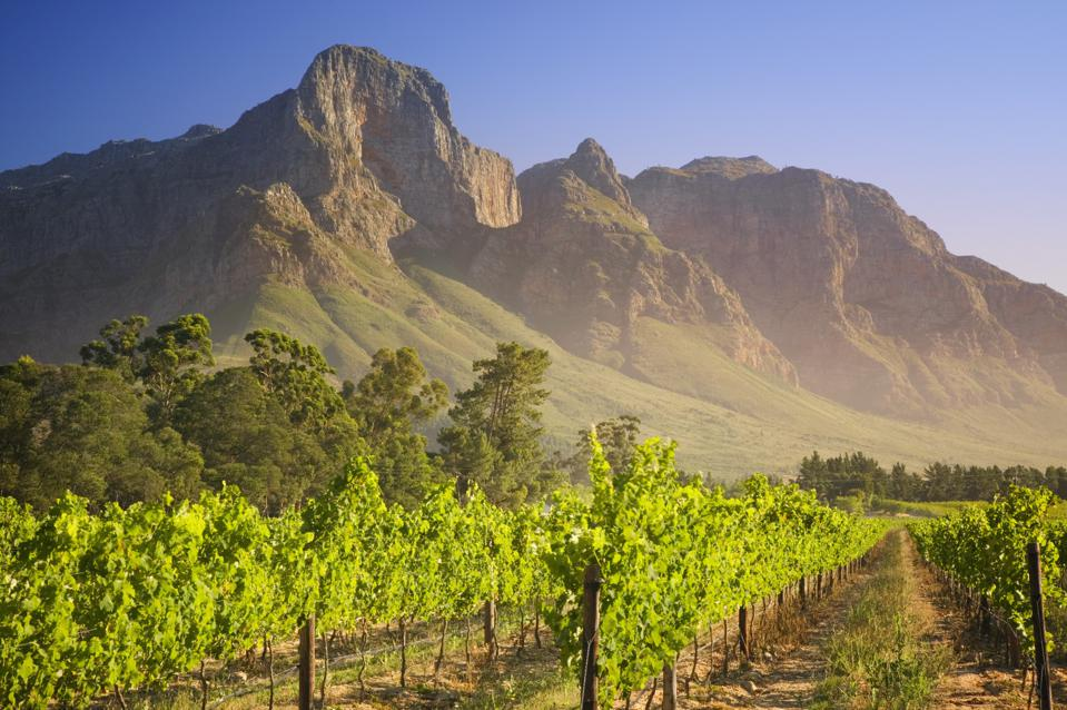 best wine vacation south africa franschoek