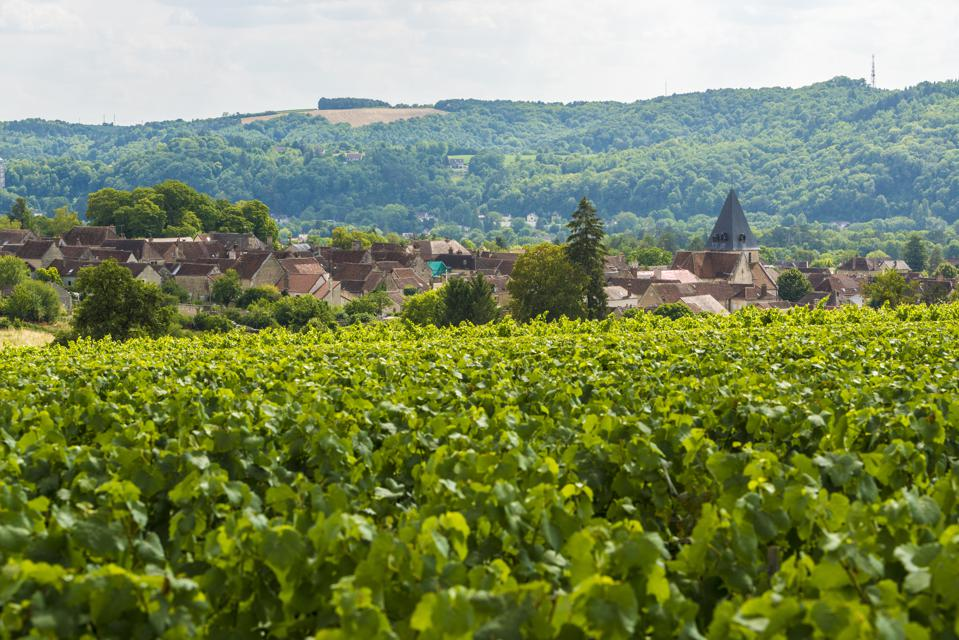 vineyards and village in France