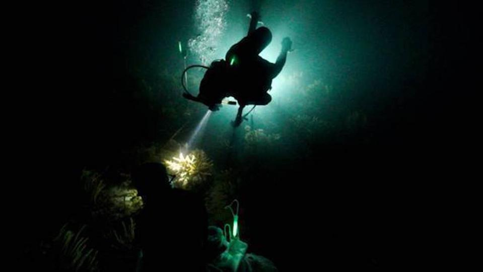 Diver in low-light conditions inspecting coral reef