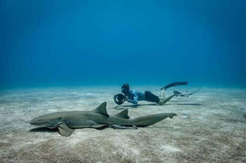 Free diver Peter Zuccarini filming a nurse shark swimming on the bottom of the ocean