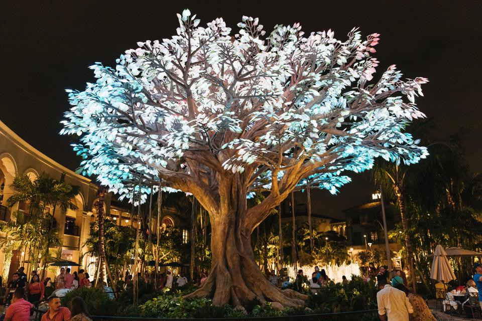 The wishing tree in West Palm Beach at night.