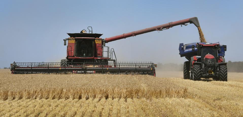 AUSTRALIA-AGRICULTURE-BARLEY