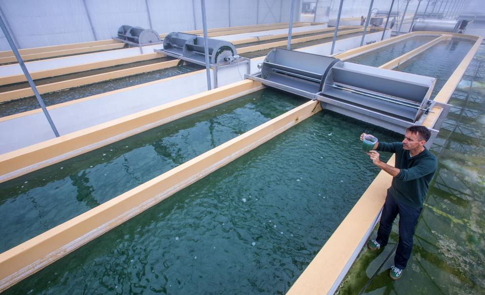 20 Oct 2020: one of the largest algae farms seen here in Germany.  Algae has long been considered a potential source of biofuel.