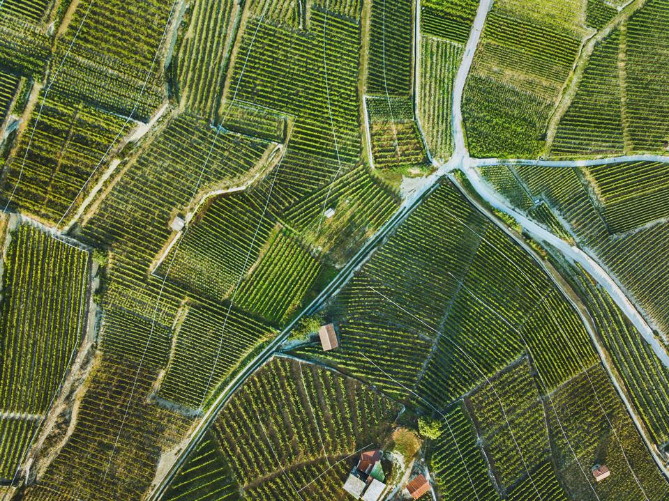 beautiful aerial landscape of wine yards