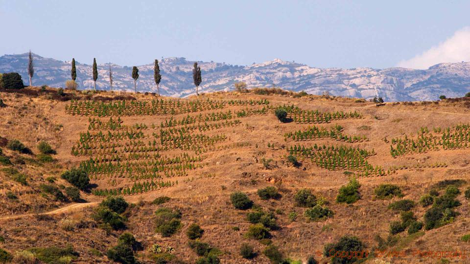 Terraced vineyards on the mountains in Priorat, Catalonia, Spain