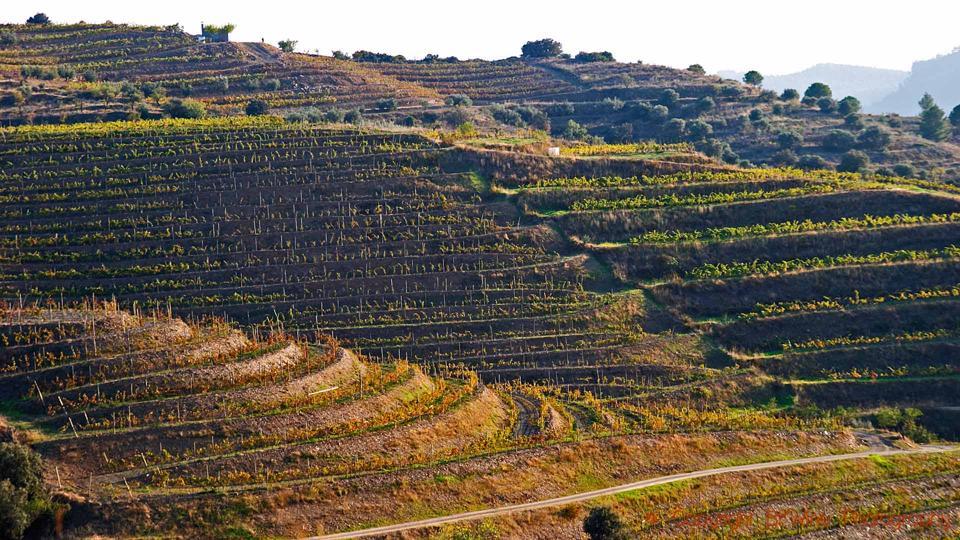 Terraced vineyards on the hillside in Priorat, Catalonia, Spain