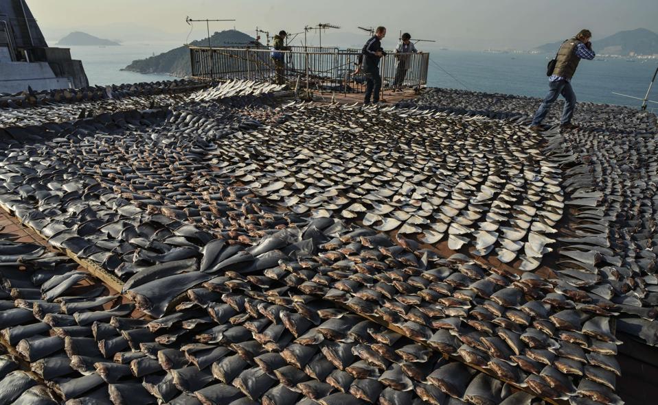 HONG KONG-ENVIRONMENT-OCEANS-BIODIVERSITY-FISHING-CLIMATE-WWF-FI
