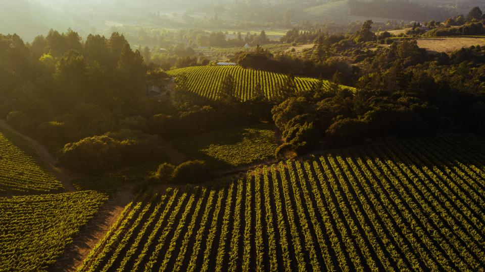 Vineyards and forest, Sonoma County, California