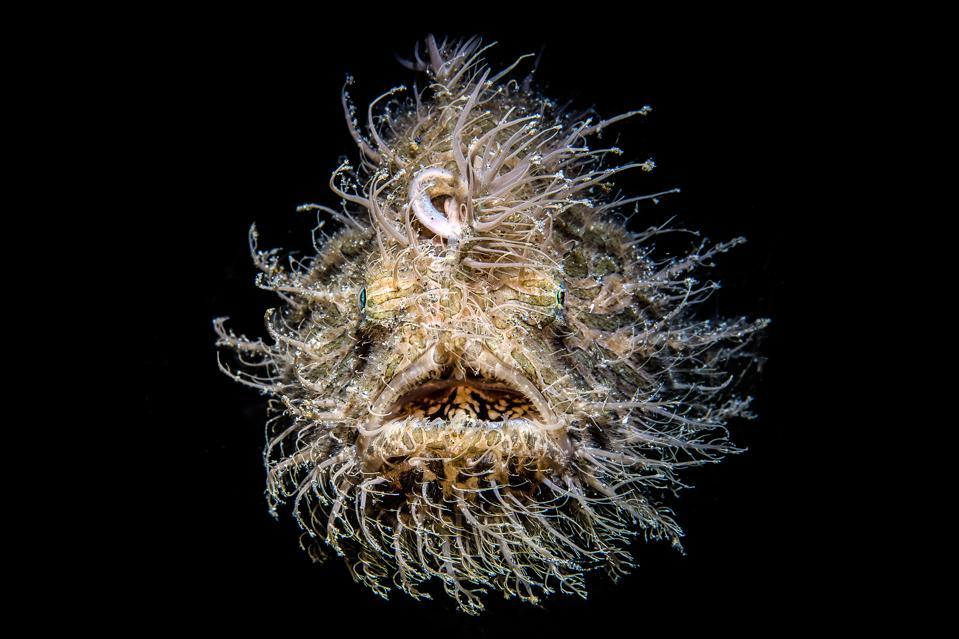 Ocean Photography Awards: Deep Ocean fish