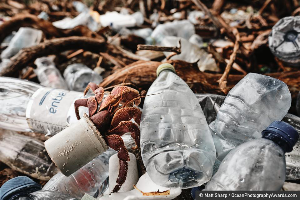 Ocean Photography Awards: A hermit crab crawls atop a pile of plastic in a shell made from manmade waste
