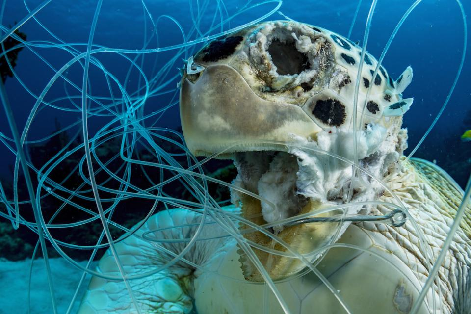 Ocean Photography Awards: A sea turtle trapped in a fishing net.